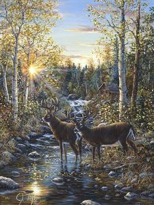 Whitetail Deer by Jeff Tift