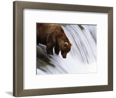 Brown Bear Fishing at Brooks Falls