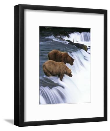 Brown Bears Fishing at Brooks Falls