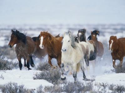 Wild Horses in Snow by Jeff Vanuga