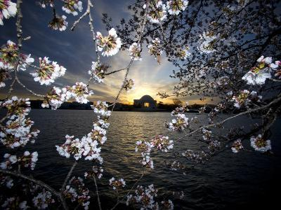 Jefferson Memorial at Dawn, and Cherry Blossoms at the Tidal Basin-Paul Sutherland-Photographic Print