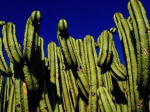 Cactus Againt a Oaxacan Sky in Yagul, Oaxaca, Mexico by Jeffrey Becom