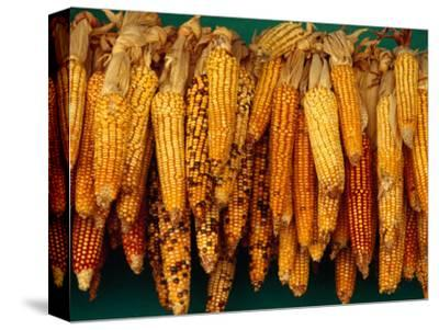 Drying Seed Corn,Francisco Morazan, Honduras