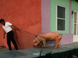 Villager Pulling Pig on Rope, Tlacotalpan, Veracruz-Llave, Mexico by Jeffrey Becom