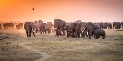 Amboseli Morning Stroll to Starbucks