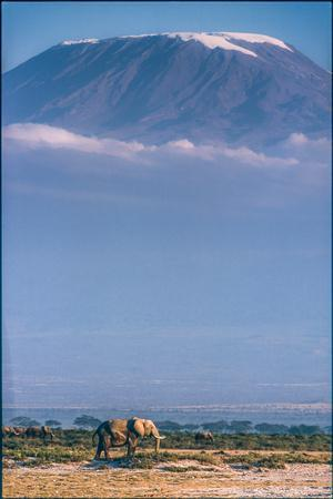 Kilimanjaro and the Quiet Sentinels