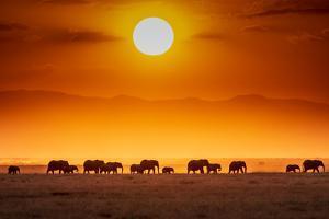 Sunrise parade by Jeffrey C. Sink