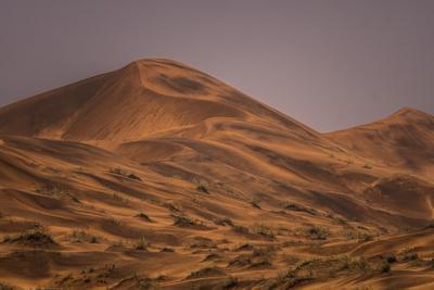 Large sand dunes, wet after a rare desert rain storm.
