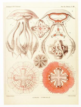 https://imgc.artprintimages.com/img/print/jelly-fish-artwork_u-l-pzgqjf0.jpg?p=0