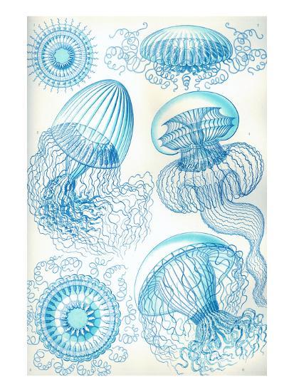 Jelly Fish-Ernst Haeckel-Art Print