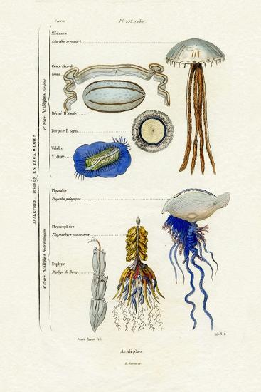 Jellyfish, 1833-39--Giclee Print
