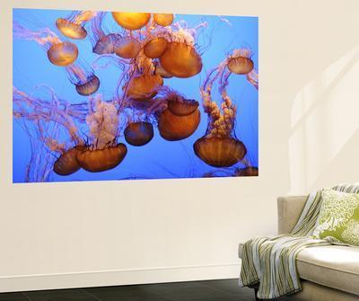 https://imgc.artprintimages.com/img/print/jellyfish-at-the-monterey-bay-aquarium_u-l-pfh0970.jpg?p=0