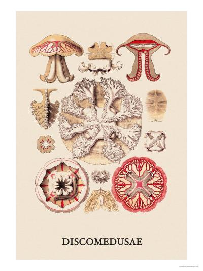 Jellyfish: Discomedusae-Ernst Haeckel-Art Print