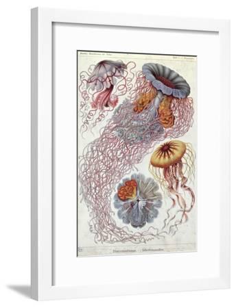 Jellyfish, from Kunstformen Der Natur, 1874-Ernst Haeckel-Framed Giclee Print