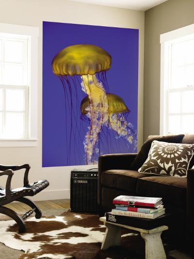 Jellyfish in Monterey Bay Aquarium-Douglas Steakley-Wall Mural