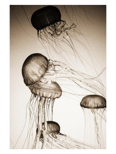 Jellyfish in Motion 2-Theo Westenberger-Photographic Print