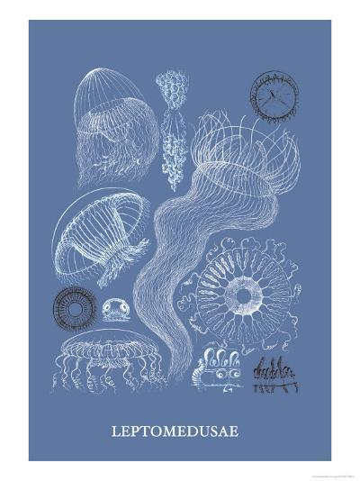 Jellyfish: Leptomedusae-Ernst Haeckel-Art Print
