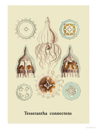 Jellyfish: Tesserantha Connectens-Ernst Haeckel-Art Print