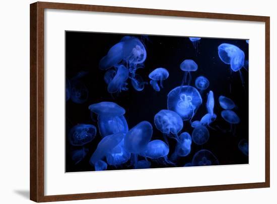 Jellyfish with Blue Light on Black Background in the Aquarium, Singapore-Niradj-Framed Photographic Print