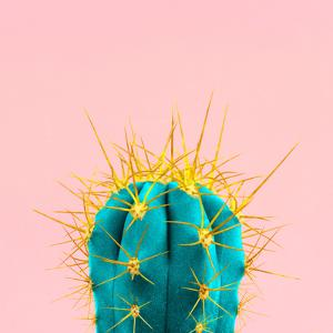 Blue Neon Cactus on A Pink Background by Jeni Foto