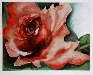 A Rose Is by Jenik Cook