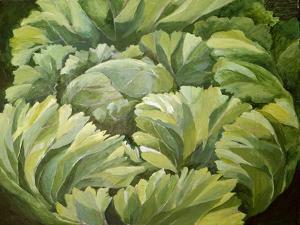 Cabbage, 2013 by Jennifer Abbott