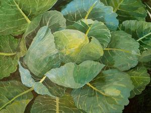 Cabbage (Blue), 2014 by Jennifer Abbott