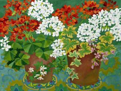 Red and White Geraniums in Pots, 2013