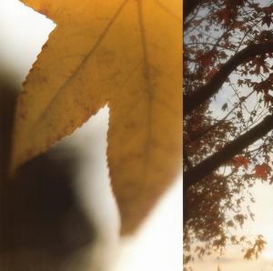 Autumn Leaves II by Jennifer Broussard