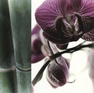 Bamboo I (Flower I) by Jennifer Broussard