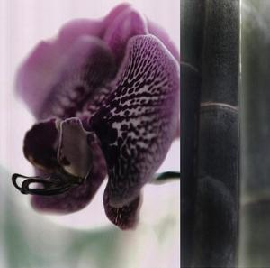 Bamboo II (Flower II) by Jennifer Broussard