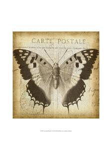 Carte Postale Butterfly II by Jennifer Goldberger