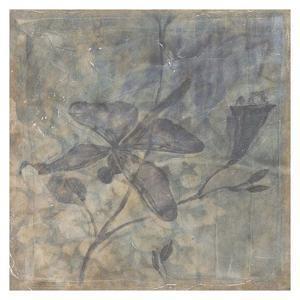 Ethereal Wings I by Jennifer Goldberger