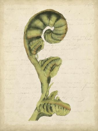 Fiddlehead Ferns I by Jennifer Goldberger