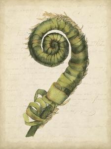 Fiddlehead Ferns II by Jennifer Goldberger