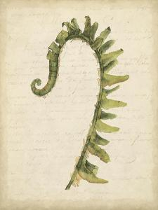 Fiddlehead Ferns IV by Jennifer Goldberger