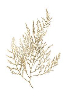 Gold Foil Algae II by Jennifer Goldberger