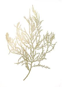 Gold Foil Algae III by Jennifer Goldberger