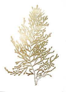 Gold Foil Algae IV by Jennifer Goldberger