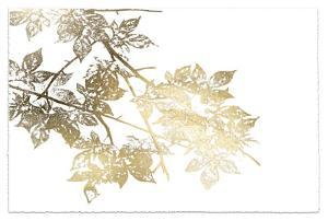 Gold Foil Maple I Deckled by Jennifer Goldberger