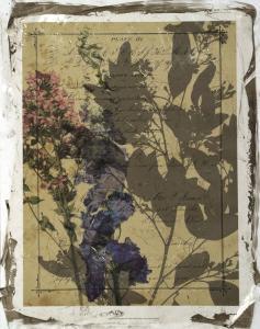 Handwritten Wildflowers II by Jennifer Goldberger