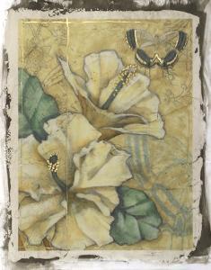 Hibiscus Medley II by Jennifer Goldberger