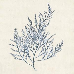 Indigo Algae I by Jennifer Goldberger