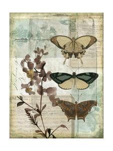 Music Box Butterflies II by Jennifer Goldberger