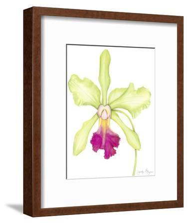 Orchid Beauty III