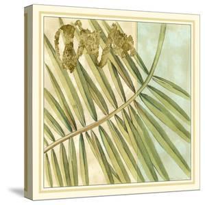 Peacock Palm VI by Jennifer Goldberger