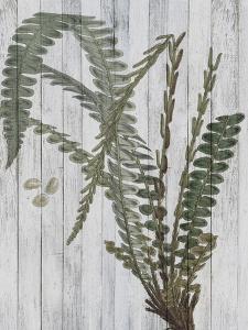 Rustic Greenery IV by Jennifer Goldberger