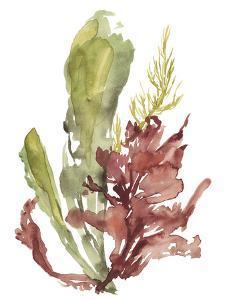 Seaweed Garden I by Jennifer Goldberger