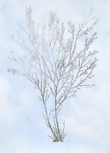 Silver Foil Algae I on Blue by Jennifer Goldberger