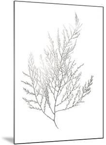 Silver Foil Algae II by Jennifer Goldberger